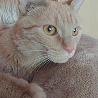 Adopt A Pet :: Stewart - South Saint Paul, MN