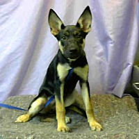 Adopt A Pet :: URGENT 8/15 @ DEVORE - San Bernardino, CA