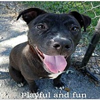 Adopt A Pet :: PEEWEE - Atlanta, GA