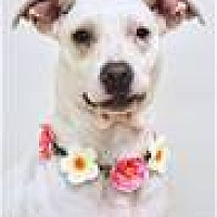 Adopt A Pet :: PIPER (ECAS Kennel C1) - Pleasanton, CA