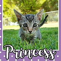 Adopt A Pet :: Princess - Edwards AFB, CA