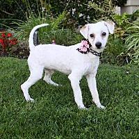 Adopt A Pet :: JAKE - Newport Beach, CA