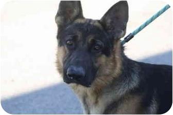 German Shepherd Dog Mix Dog for adoption in Shelbyville, Kentucky - Tyree