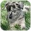 Photo 2 - Catahoula Leopard Dog Puppy for adoption in Meridian, Idaho - Sam