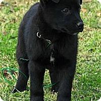 Adopt A Pet :: Aaron - Staunton, VA