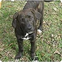 Adopt A Pet :: Batman - Geismar, LA