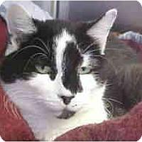 Adopt A Pet :: Bud - Lunenburg, MA