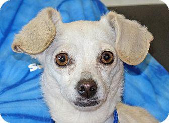 Terrier (Unknown Type, Small) Mix Dog for adoption in Spokane, Washington - June