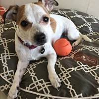 Adopt A Pet :: Leilani - Orange, CA