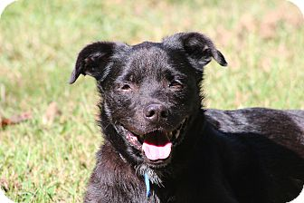 Terrier (Unknown Type, Medium)/Retriever (Unknown Type) Mix Dog for adoption in Prince Frederick, Maryland - Greta