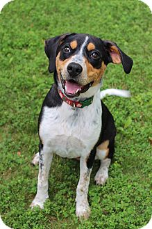 Coonhound Mix Dog for adoption in Manitowoc, Wisconsin - Daisy