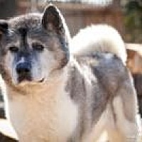 Adopt A Pet :: Percy - Toms River, NJ