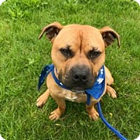 Adopt A Pet :: Clyde - Binghamton, NY