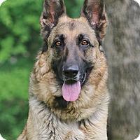 Adopt A Pet :: Fresca - Nashville, TN