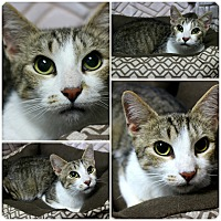 Adopt A Pet :: Noelle - Forked River, NJ