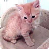 Adopt A Pet :: Topaz - Kirkwood, DE