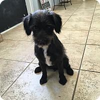 Adopt A Pet :: Queenie - Kirby, TX