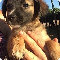 Adopt A Pet :: Doni - Vacaville, CA