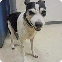 Rat Terrier Mix Dog for adoption in Gulfport, Mississippi - Yoshi - Lonely Heart