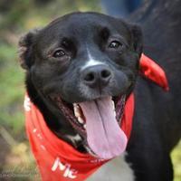 Adopt A Pet :: Arthur - Miami, FL