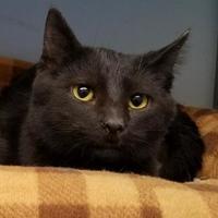 Adopt A Pet :: Marcel - Marshfield, WI