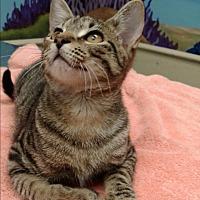 Adopt A Pet :: Tiggy - Pinehurst, NC