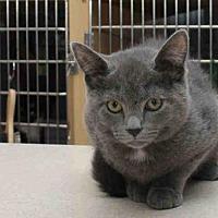 Adopt A Pet :: STARK - Pittsburgh, PA
