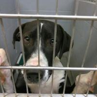 Adopt A Pet :: 36528912 - Los Lunas, NM