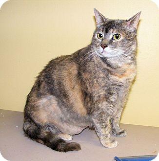 Calico Cat for adoption in SYDNEY, Nova Scotia - Bertha