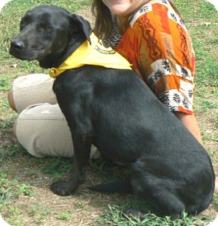Labrador Retriever Mix Dog for adoption in Centerville, Tennessee - Bessie