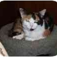 Adopt A Pet :: Shea - North Boston, NY