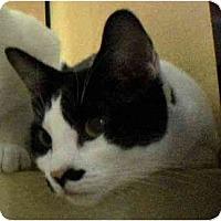 Adopt A Pet :: Rosie - Modesto, CA