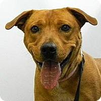 Adopt A Pet :: Bow - Cheyenne, WY