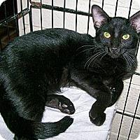 Adopt A Pet :: Sprocket - Scottsdale, AZ