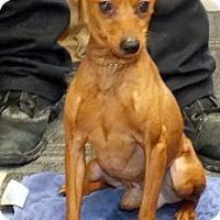 Adopt A Pet :: Prancer - Tinton Falls, NJ
