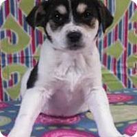 Adopt A Pet :: Leslie - Bedminster, NJ