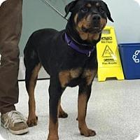 Adopt A Pet :: Anri - Frederick, PA