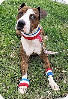 Terrier (Unknown Type, Medium) Mix Dog for adoption in Lansing, Kansas - Avery