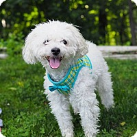 Adopt A Pet :: Dobie - Whitehall, PA