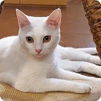 Adopt A Pet :: Diva - Encinitas, CA
