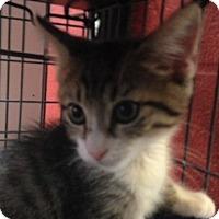 Adopt A Pet :: Mariano - Sarasota, FL