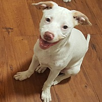 Adopt A Pet :: Chip - Savannah, GA