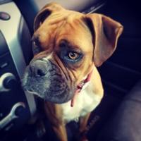 Adopt A Pet :: Rumor - Tulsa, OK