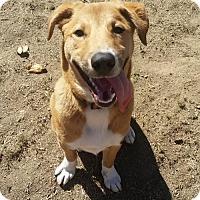 Adopt A Pet :: Baxter - Petaluma, CA