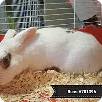 Adopt A Pet :: BUNS - Toronto, ON