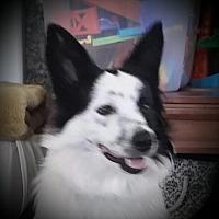 Adopt A Pet :: Blossom - Oakley, CA