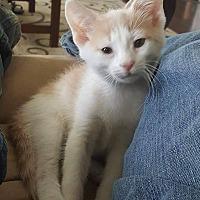 Adopt A Pet :: Gerin - Apex, NC