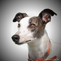 Adopt A Pet :: Rosanne - Woodinville, WA
