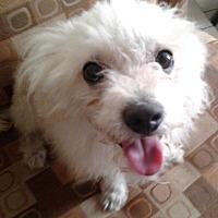 Adopt A Pet :: SKIPPY - Hollywood, FL
