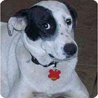 Adopt A Pet :: Pip (Flagstaff) - Scottsdale, AZ